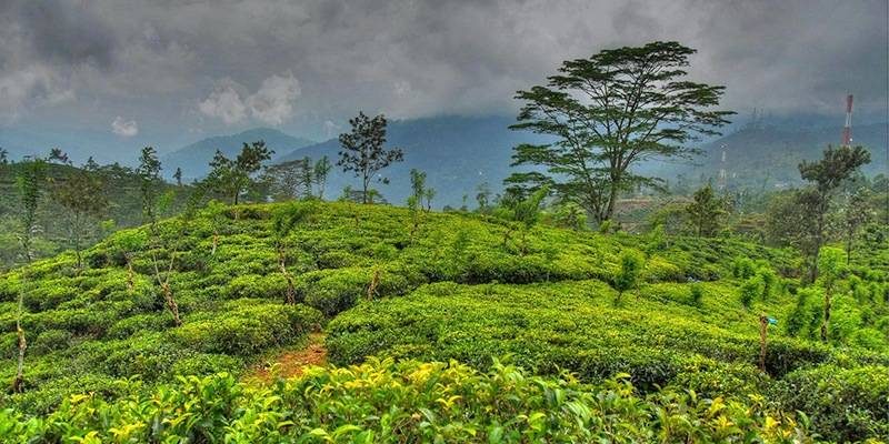 Ultimate Sri Lanka Travel Guide - Hiking in Tea Country Hills