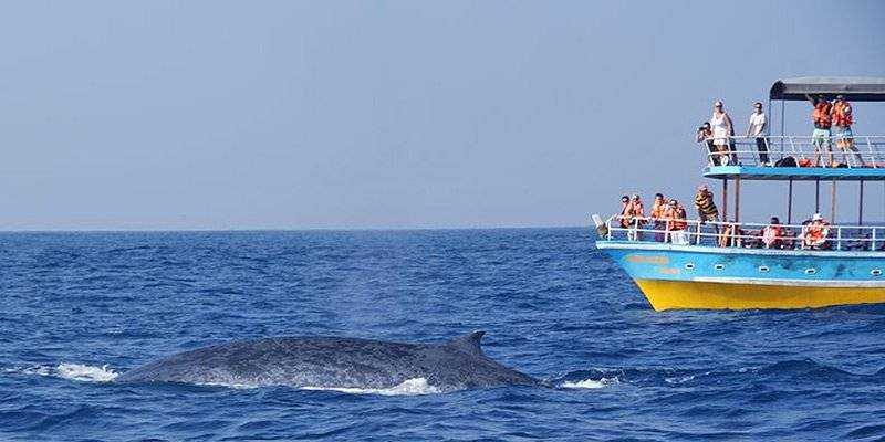 Ultimate Sri Lanka Travel Guide - Whale Watching in Sri Lanka