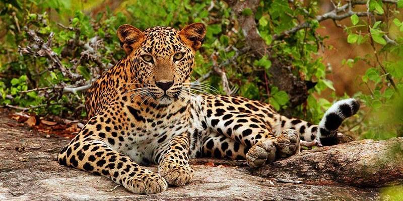 Ultimate Sri Lanka Travel Guide - Yala National Park