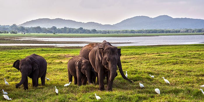 Sri Lanka Wildlife - Things To Do on a Sri Lanka Holiday