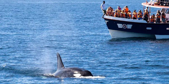 Whale Watching in Mirissa - Things To Do on a Sri Lanka Holiday