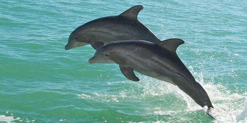 Things to do in Goa - Dolphin tour Goa