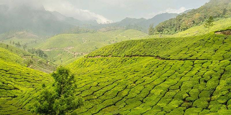 Top things to do in Kerala - Hill Stations