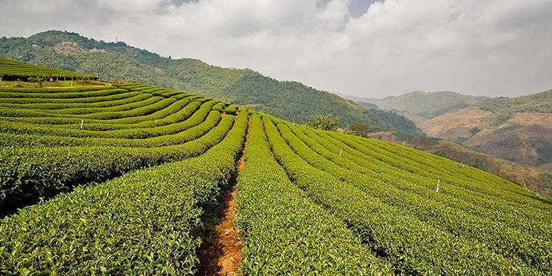 Top things to do in Kerala - Tea and Spice Plantations