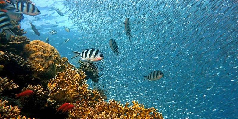 Things to Do in Lakshadweep - Snorkeling