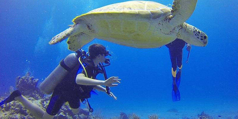 Things to Do in Lakshadweep - Scuba Diving