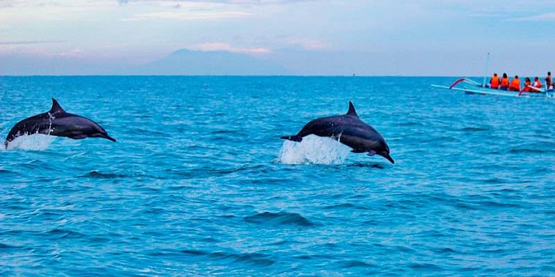 Dolphin Watch Cruises Goa - Things To Do in North Goa