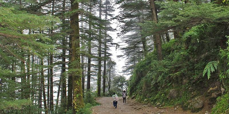 Triund Trek: Complete Guide - Triund Trek Difficulty