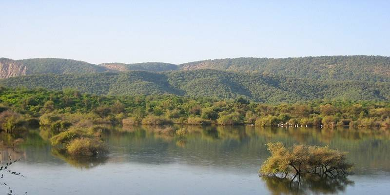 Weekend Getaways from Delhi - Sariska & Alwar