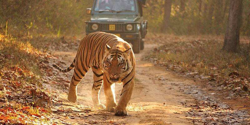 Weekend Getaways from Delhi - Corbett National Park
