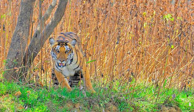 Wildlife Destinations in South India - Nagarhole National Park