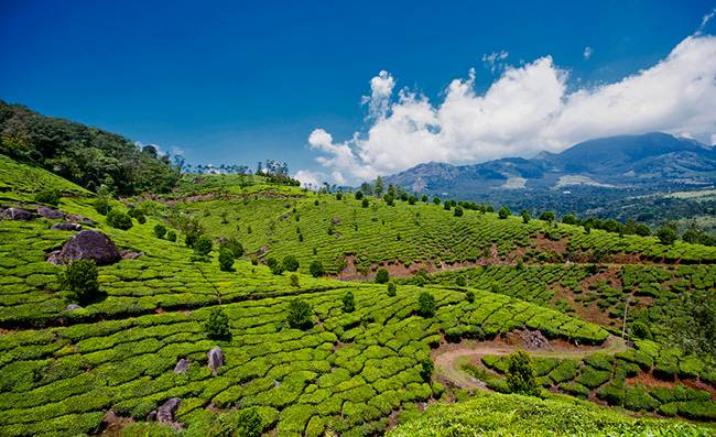 Munnar - the Hill Station of Kerala in Idukki